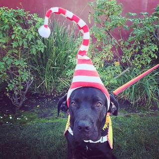 Baloo aka Mr Elf :)