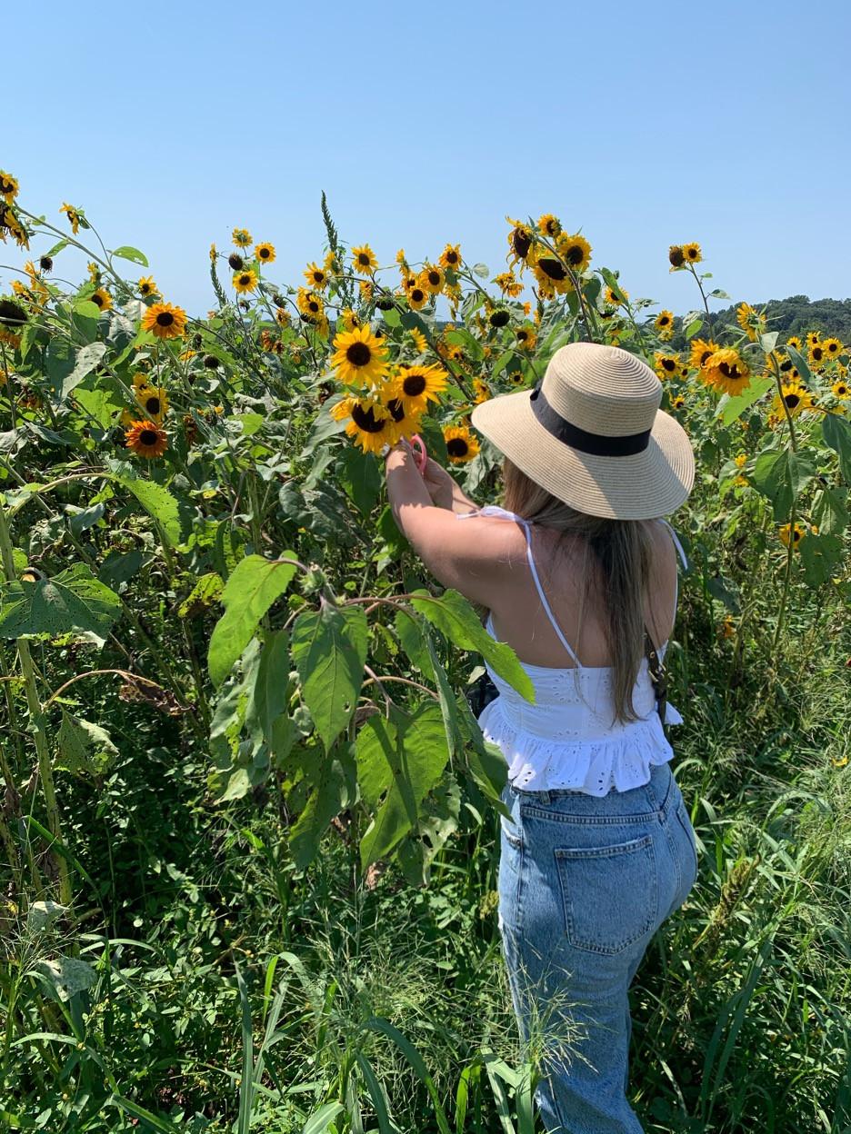 Recogido de girasoles y flores en Maryland