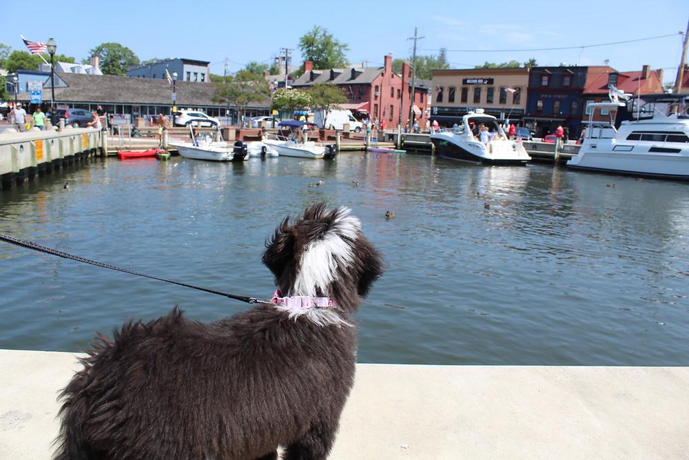 Explorando la ciudad de Annapolis en Maryland.