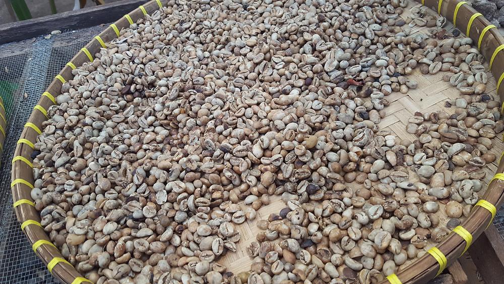 El café más caro en el mundo, Kopi Luwak.