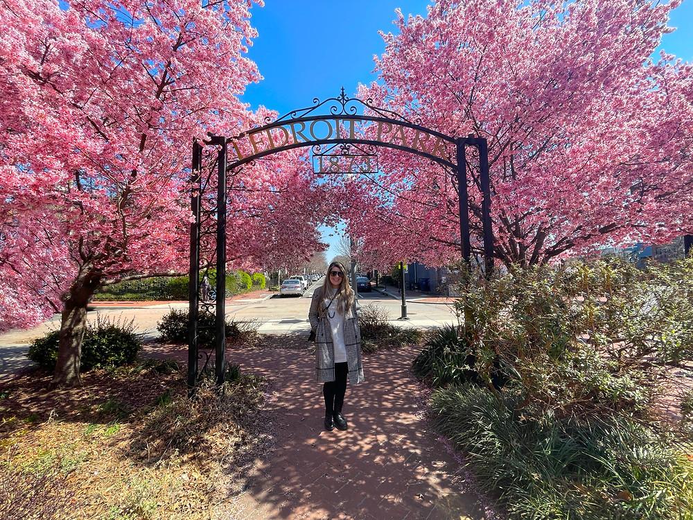 Cerezos en LeDetroit Park en Washington, D.C.