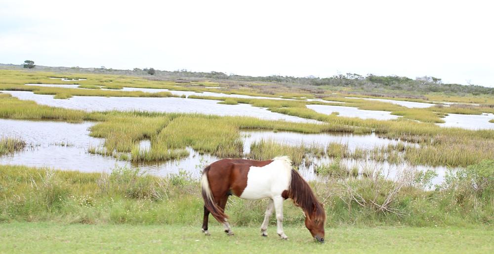 Visitando la Isla de Assateague y sus playas en Maryland.