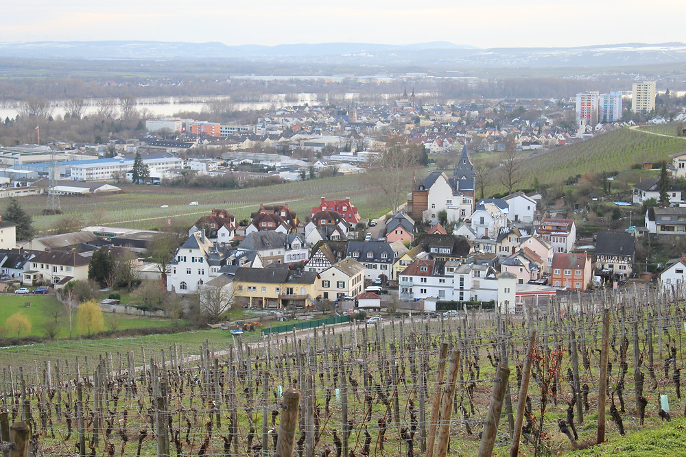 Vista desde Schloss Johannisberg en Alemania.