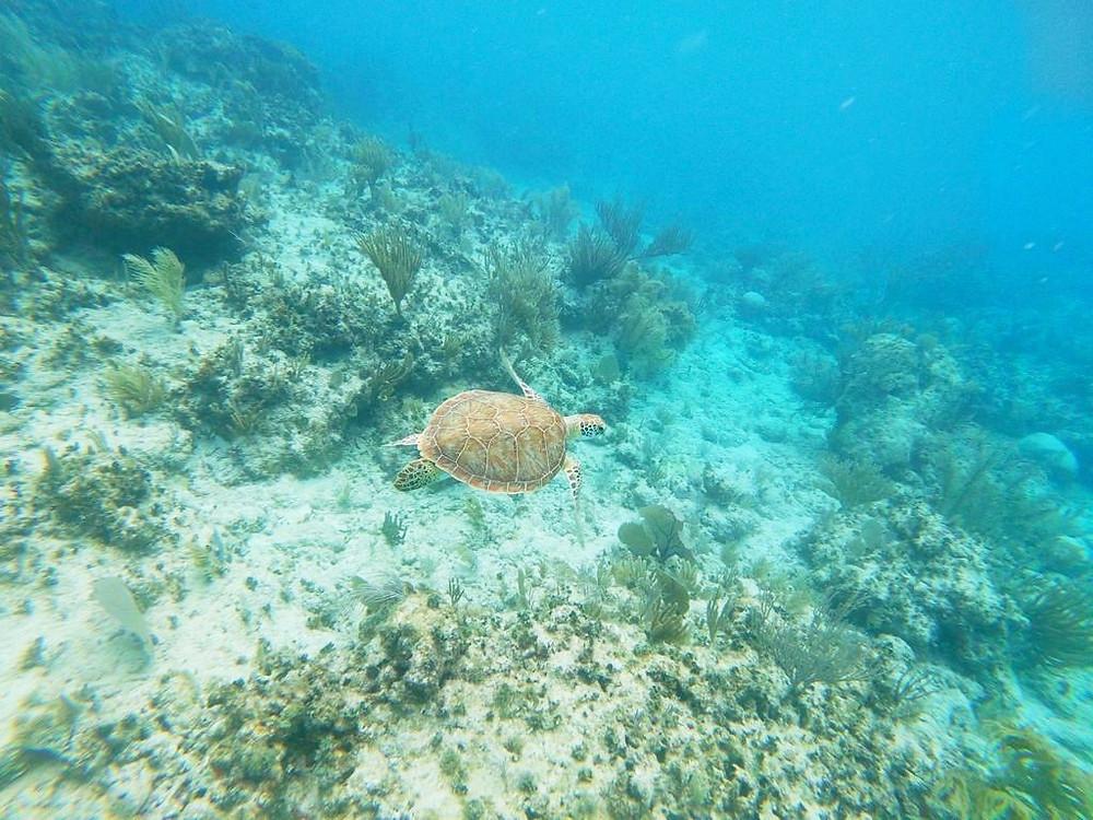 El Mar Caribe cercano al municipio de Fajardo, Puerto Rico.