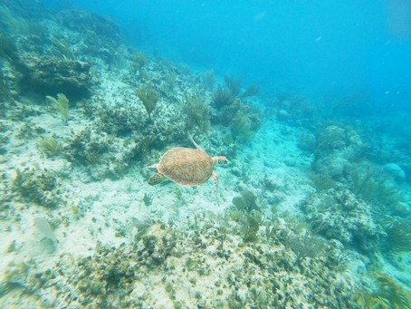 Un día en las islas paradisíacas de Icacos y Palomino