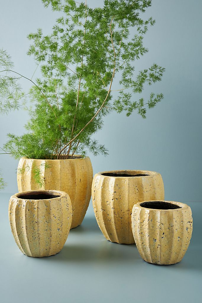 Collection of yellow rustic pottery vases with green plant on blue background