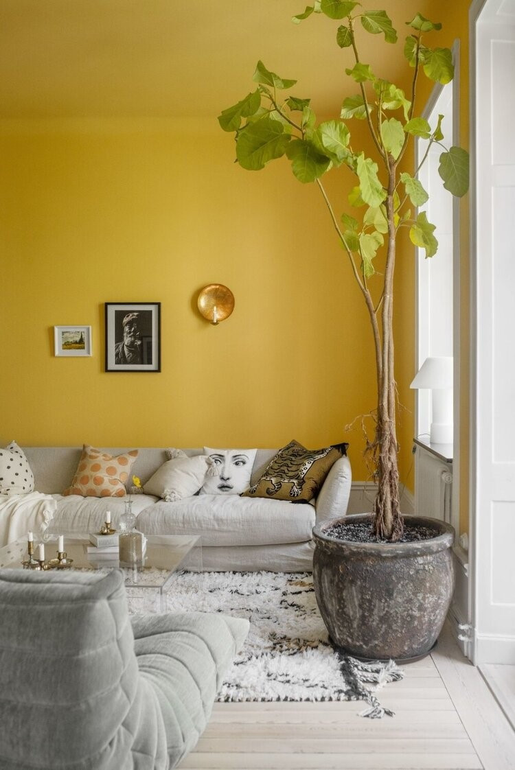 Yellow painted wall with two framed prints sconce grey couch with throw pillows shag white and grey area rug dark grey floor pot with fiddle leaf plant on white wash floors