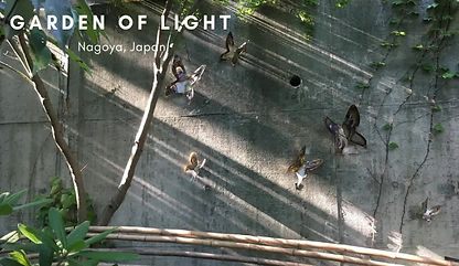 Yuri Tsuzuki: Butterfly Garden, Nagoya, Japan