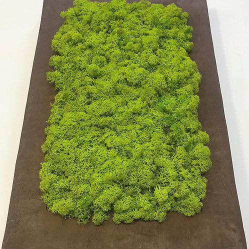 Beton keretes izlandi zuzmó kép (30x45)