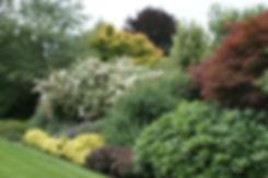 shrub border.jpg