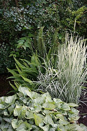 ferns and grasses google search.jpg