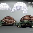 Turtle_Fig.jpg