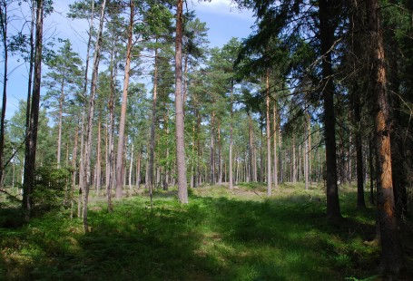 Bredsandsskogen1-455x310.jpg