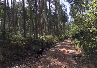 Local wooded tracks are great for a walk or a ride.