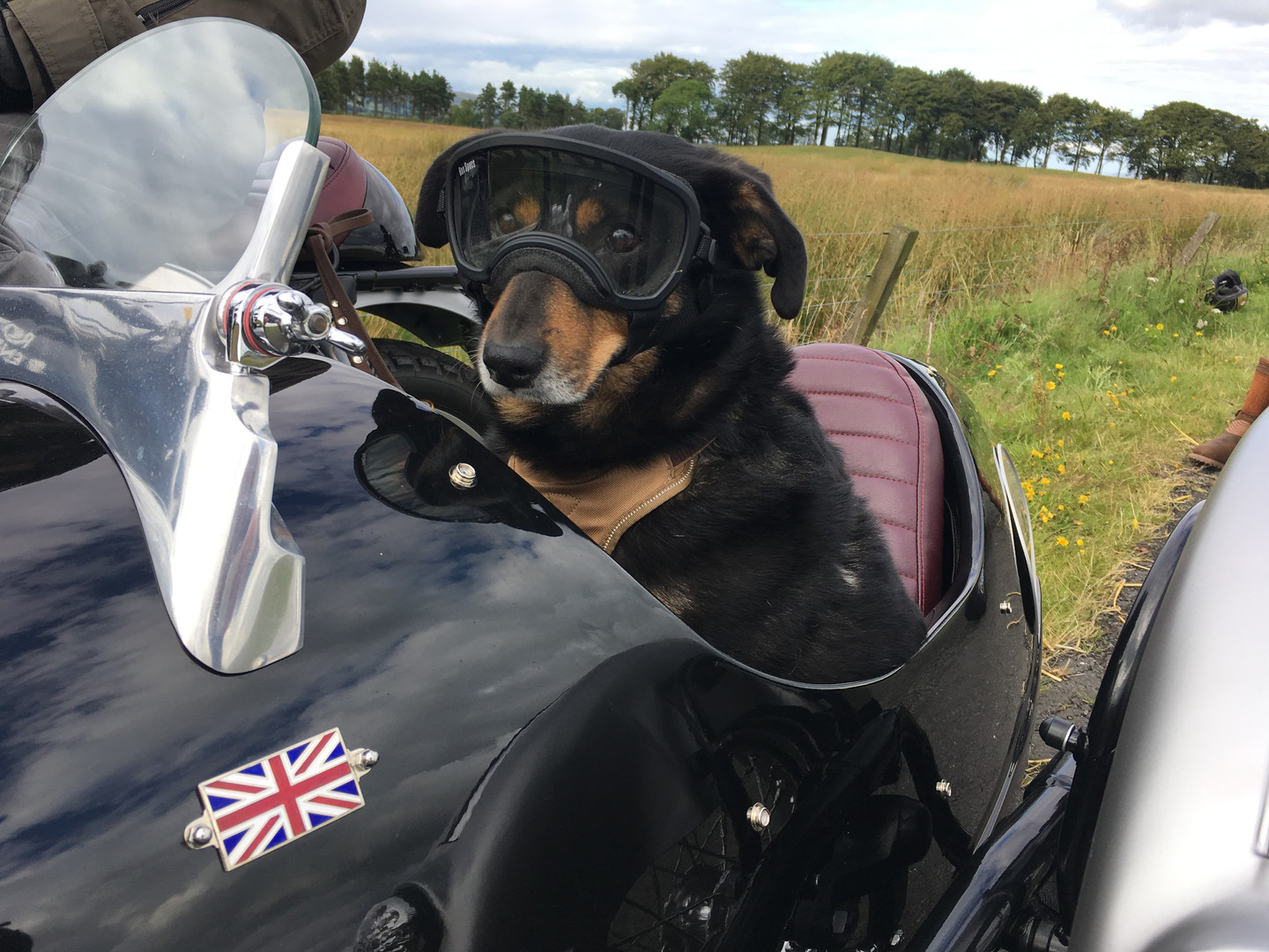 Gusto Motorbikes _ Royal Enfield 535GT sidecar combination and the Gusto garage dog