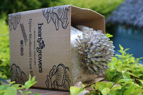 Etna Grey Oyster Mushroom Grow Kit