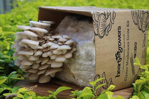 Ivory Oyster Mushroom Grow Kit