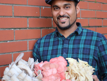 From mental breakdown to urban farmer, a family takes to mushroom growing out of the pandemic