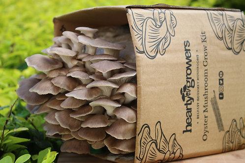 Indian / Phoenix Oyster Mushroom Grow Kit