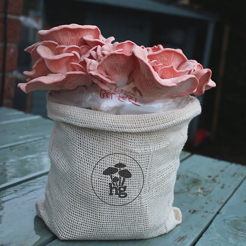 Pink Oyster Mushroom Grow Kit
