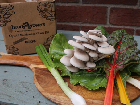 Oyster Mushrooms, Rainbow Chard & Spring Onions