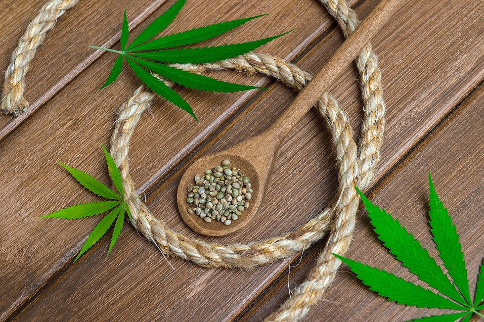 Green marijuana leaf, cannabis seeds, wo