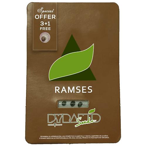 FEM - RAMSES X3 UNIDADES + 1 GRATIS
