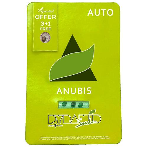 AUTO - ANUBIS X3 UNIDADES + 1 GRATIS
