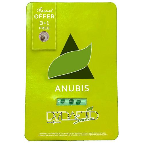 FEM - ANUBIS X3 UNIDADES + 1 GRATIS