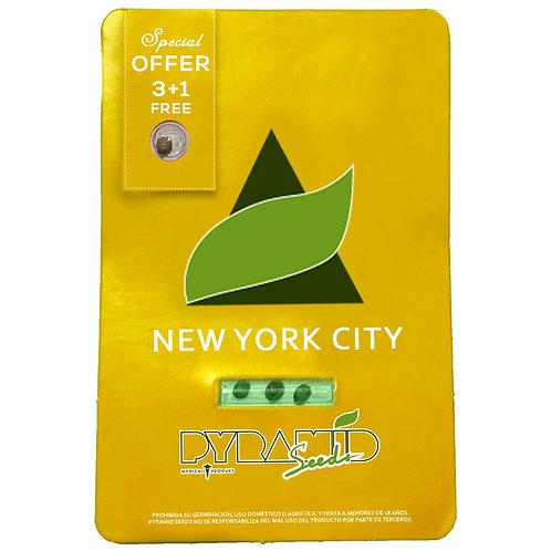 FEM - NEW YORK CITY X3 UNIDADES + 1 GRATIS