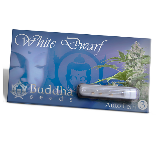AUTO - WHITE DWARF BUDDHA X3 UNIDADES