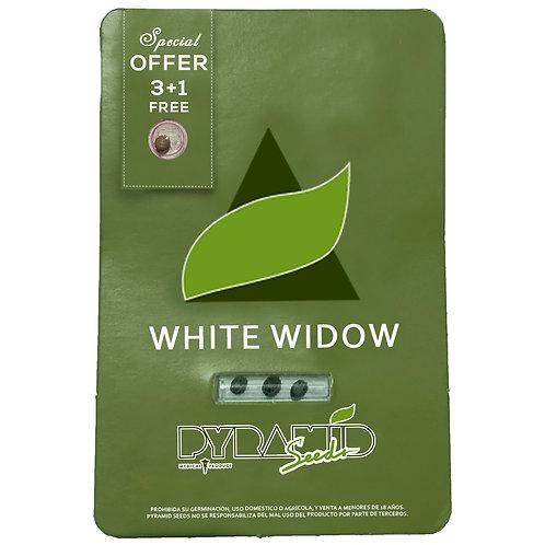 FEM - WHITE WIDOW X3 UNIDADES + 1 GRATIS