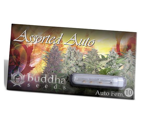 AUTO - ASSORTED MIX BUDDHA X10 UNIDADES