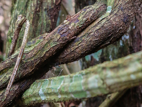 The Three Gifts of Ayahuasca