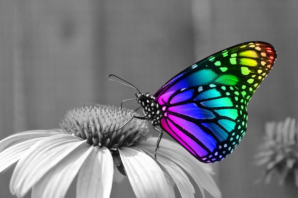 butterfly-286280_1280.jpg