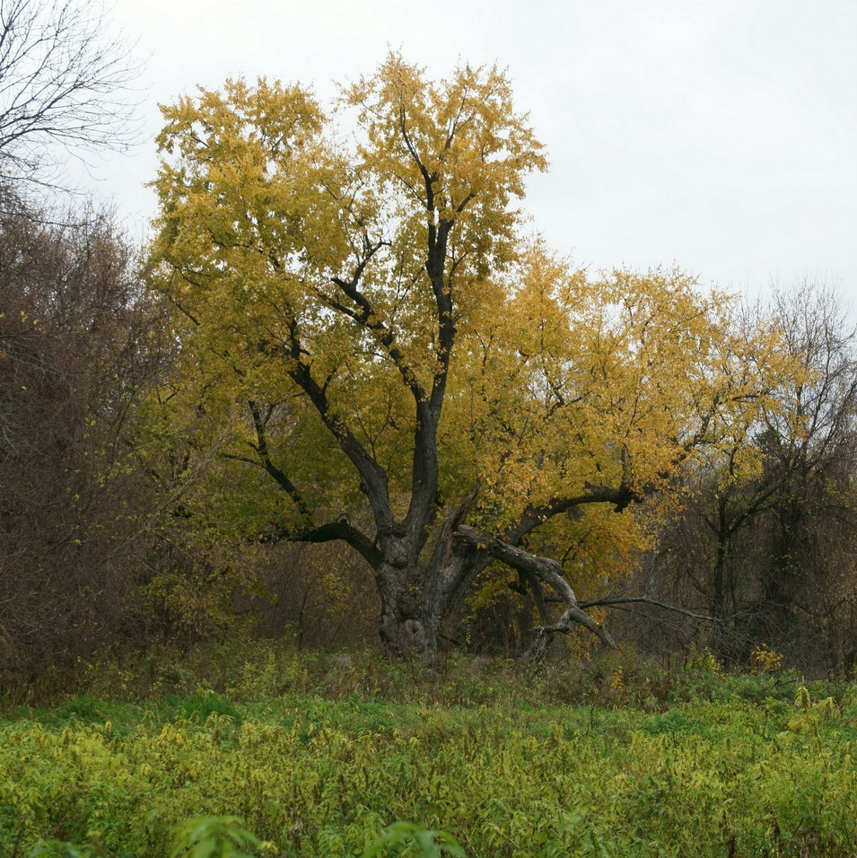 The Old General - Early Fall