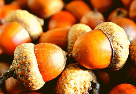 Health Benefits of Acorns