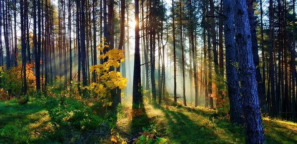 terapia lasem w AgroRoma
