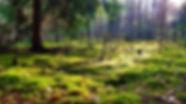 puszcza w pobliżu AgroRomy