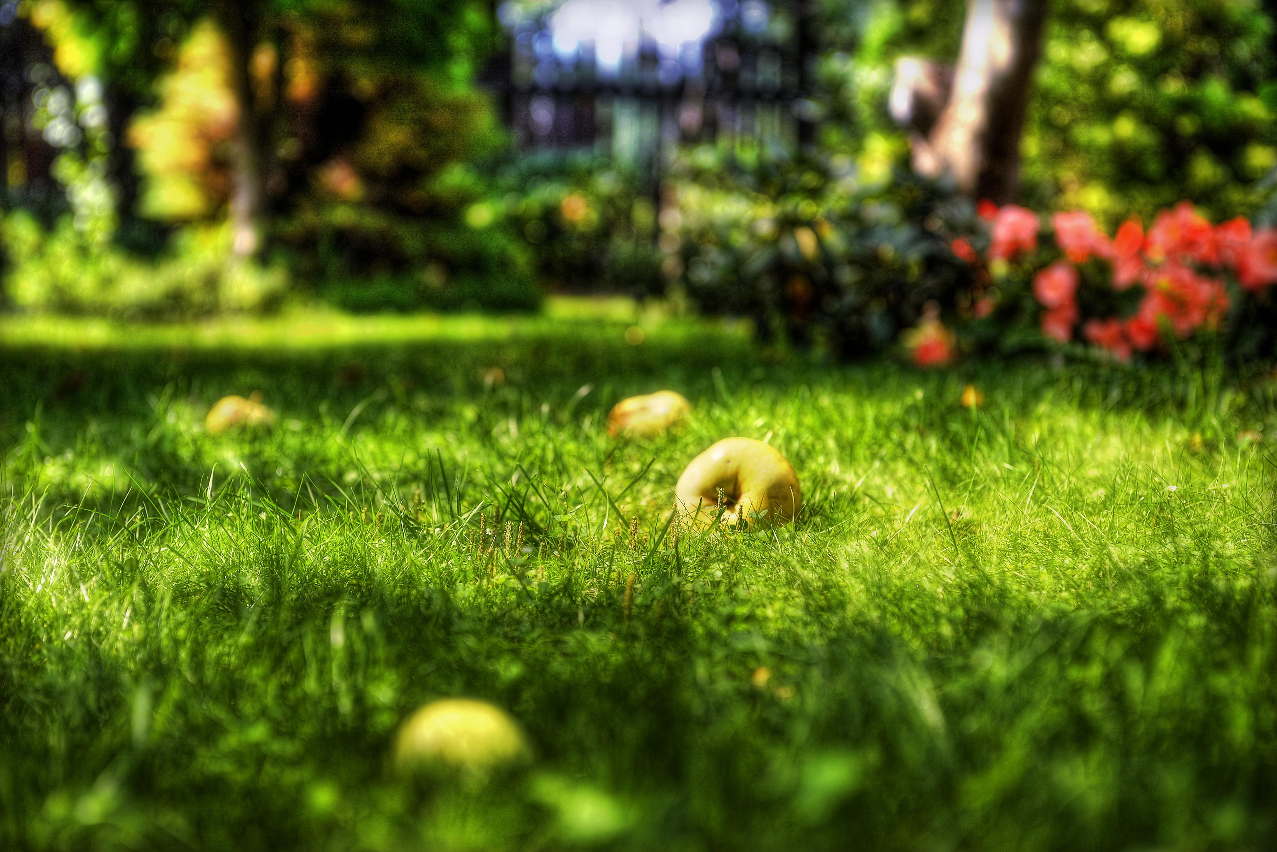 Nasz ogród - Jabłka 01