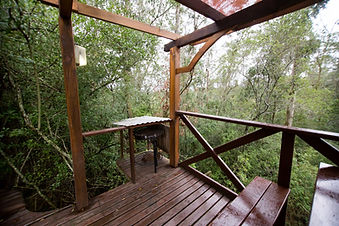 Coucal Cabin Fern gully Knysna (5).JPG