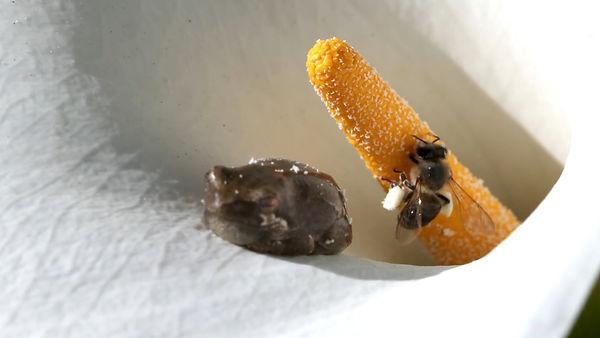 Frog and bee.jpg
