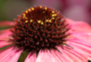 Flower-2-Pink.png