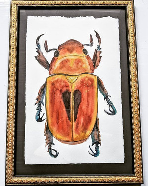 Beautiful watercolor junebug by @s.e.cow