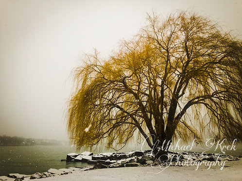 Misty Willow