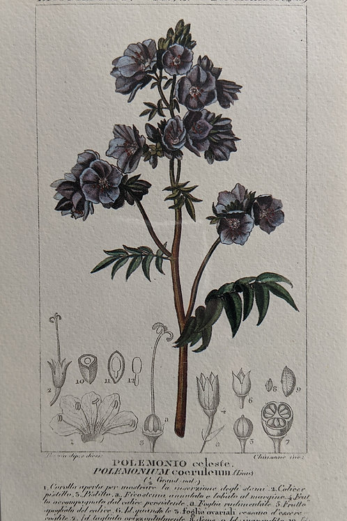 Vintage Botanical Print #3