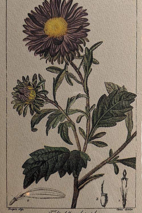 Vintage Botanical Print #4