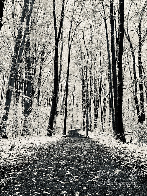 Winter Trees B&W