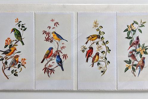 Vintage Bird Prints (Set of 4)