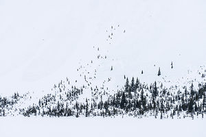 Abstract trees on snowy hillside